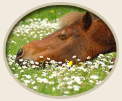 Horse Aromatherapy Essential Oils