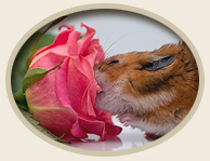 Small Animal Aromatherapy Essential Oils