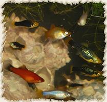 Add Krill to Fish Shrimp & Aquatic Snail Diets